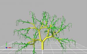 Árbol de palto 3D en el software Groimp.