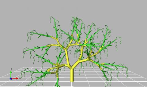 Conociendo las estructuras de un árbol de palto