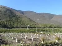 """13 de Noviembre: Seminario """"Recursos hídricos disponibles y teledetección de su impacto en la fruticultura de la Región de Valparaíso"""""""